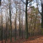 Aragas-trail-run-36